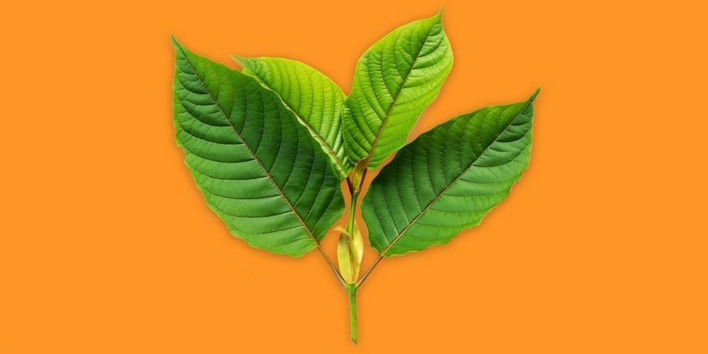 Whole Earth Gifts What is Kratom? wholeearthgifts.com